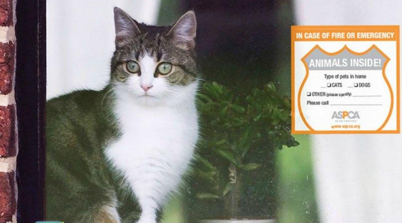ASPCA: FREE Pet Rescue Kit Window Sticker, Magnet & More