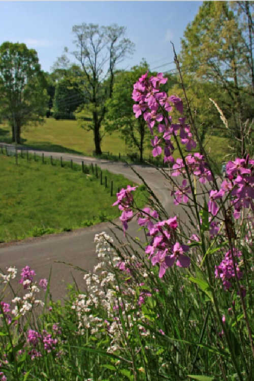 FREE 2021 Roadsides in Bloom Calendar with Free Shipping